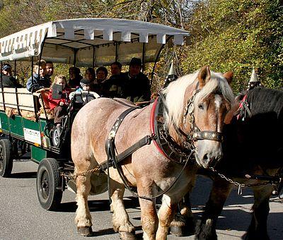 Pferdekutsche im Christianental