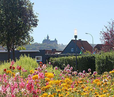 Blumenpracht im Wernigeröder Bürgerpark mit dem Schloss im Hintergrund