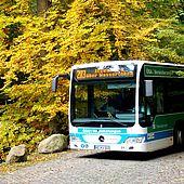 Bus der Harzer Verkehrsbetriebe fährt durch den Herbstwald