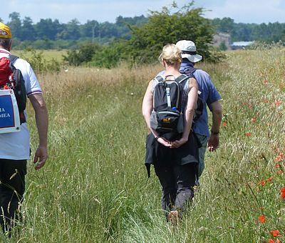 Pilger laufen durch ein Feld