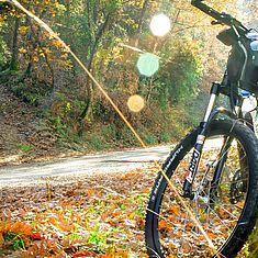 Fahrrad steht im Wald